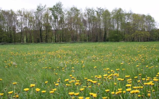 Park meadow